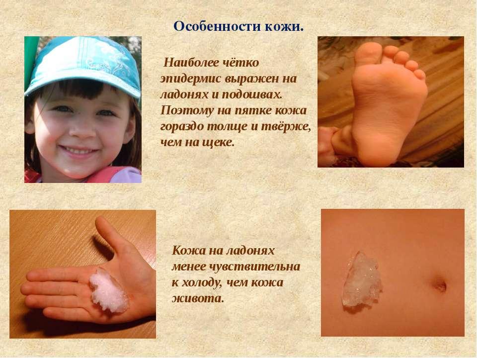 Особенности кожи. Наиболее чётко эпидермис выражен на ладонях и подошвах. Поэ...