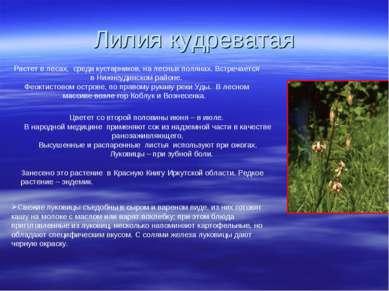 Лилия кудреватая Растет в лесах, среди кустарников, на лесных полянах. Встреч...