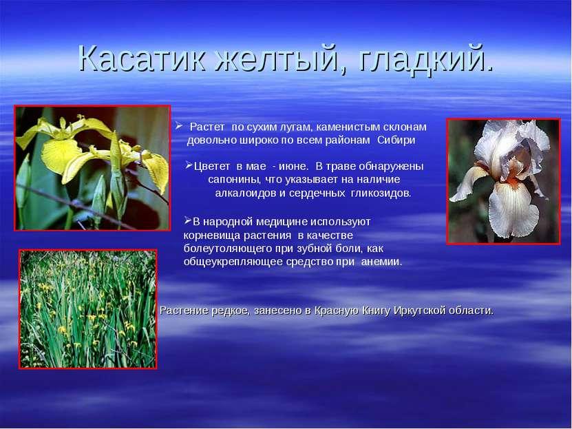 Касатик желтый, гладкий. Растение редкое, занесено в Красную Книгу Иркутской ...