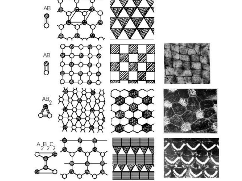 11 двухмерных моделей эпителиев и примеры их реализации