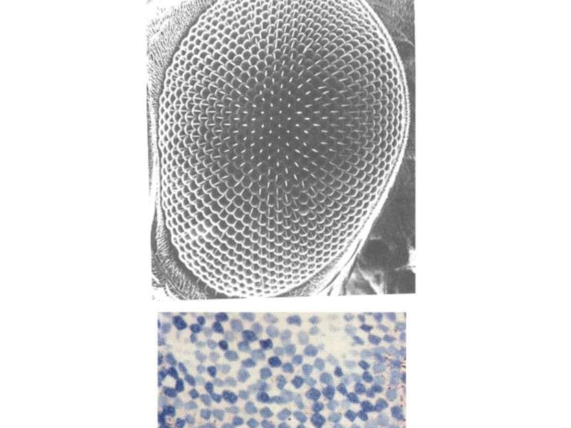 «Зашумление» тканевой структуры
