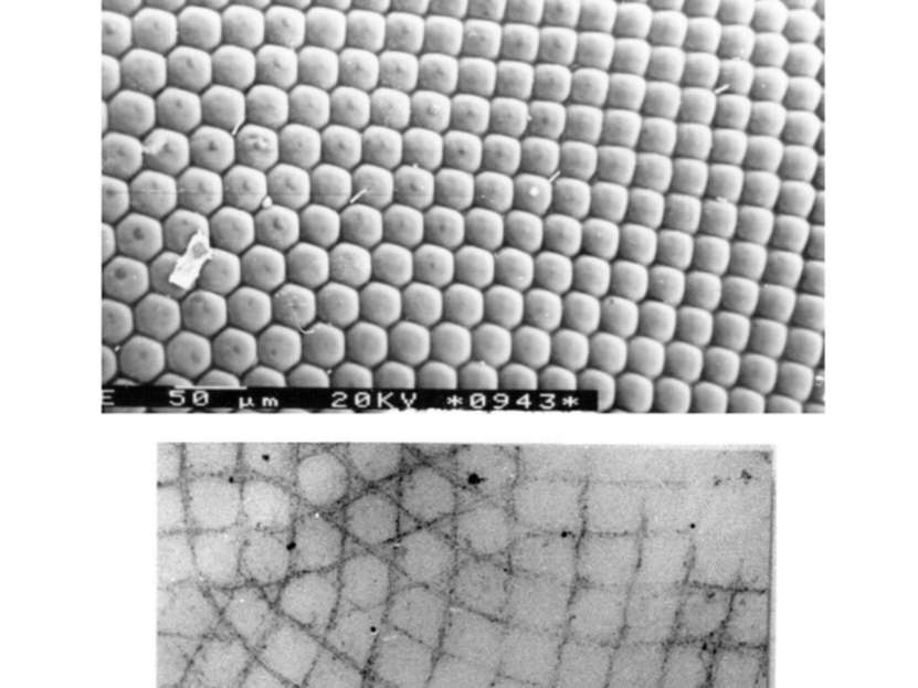 Трансформации мозаик