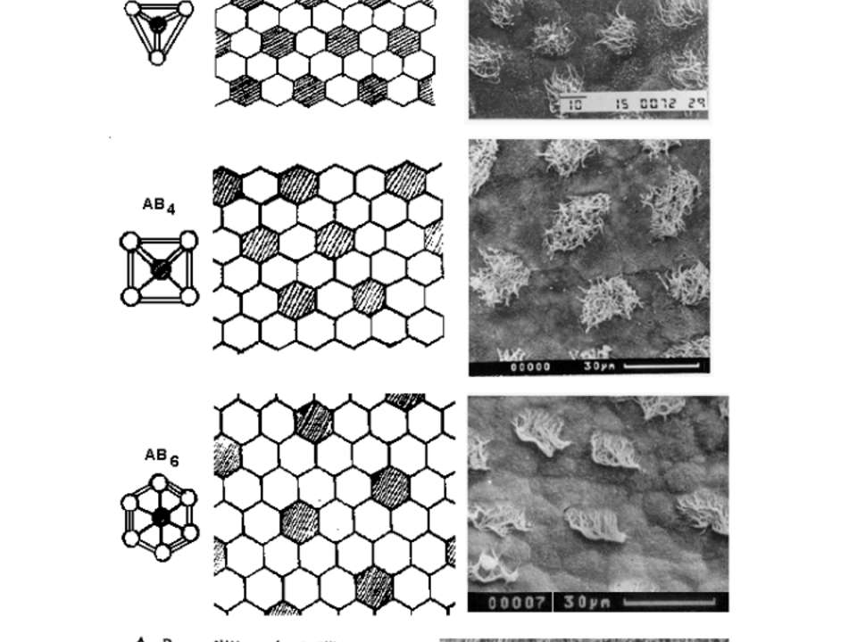 Хроматческие варианты 2-D мозаик