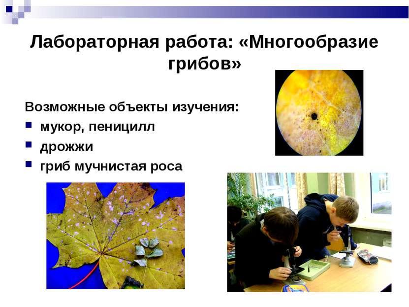Лабораторная работа: «Многообразие грибов» Возможные объекты изучения: мукор,...