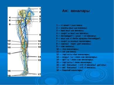 1 — төменгі қуыс вена; 2 — жалпы мықын венасы; 3 — ішкі мықын венасы; 4 — сыр...
