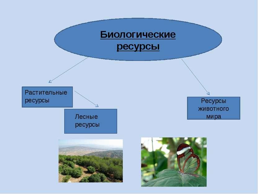 Биологические ресурсы Растительные ресурсы Лесные ресурсы Ресурсы животного мира