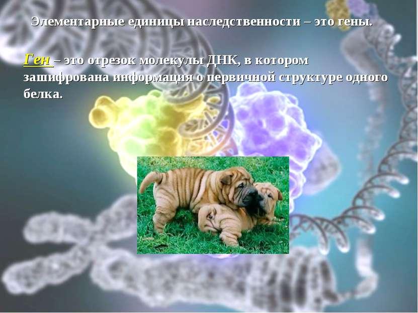 Элементарные единицы наследственности – это гены. Ген – это отрезок молекулы ...