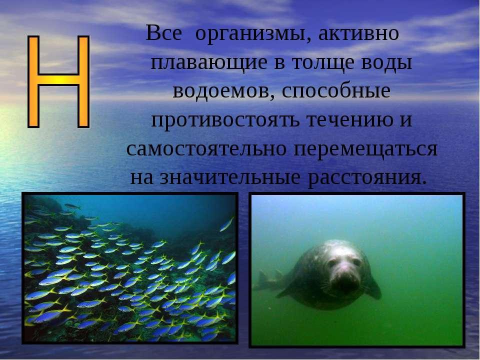 Все организмы, активно плавающие в толще воды водоемов, способные противостоя...