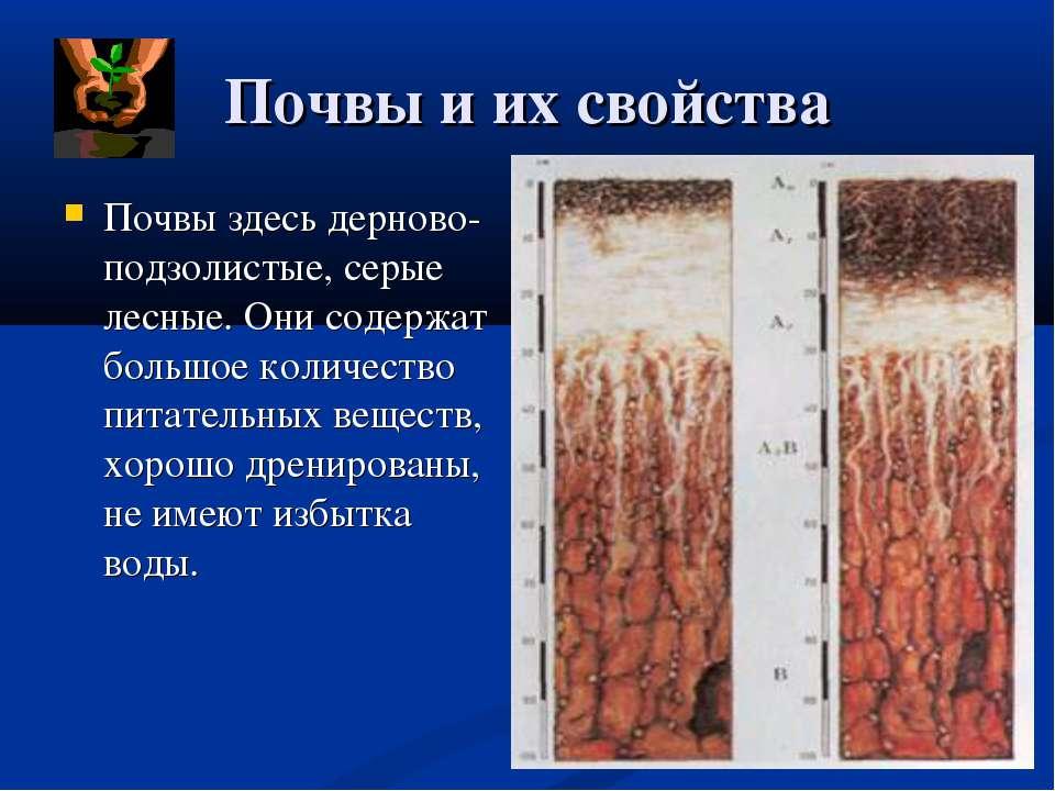 Почвы и их свойства Почвы здесь дерново- подзолистые, серые лесные. Они содер...