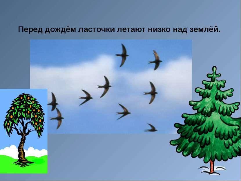 Перед дождём ласточки летают низко над землёй.