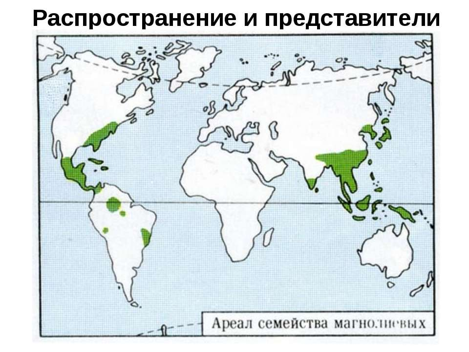 Распространение и представители