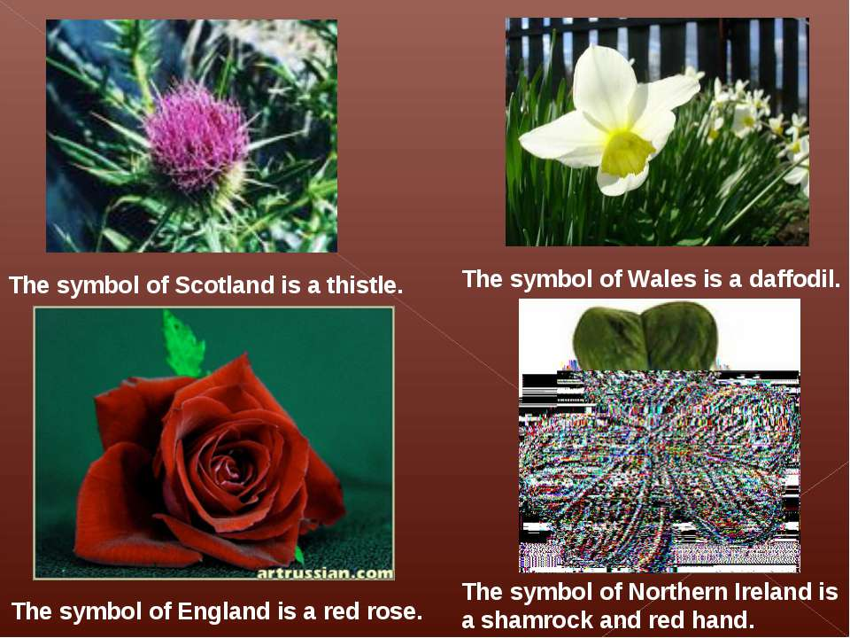 The symbol of Scotland is a thistle. The symbol of Wales is a daffodil. The s...