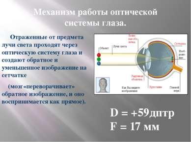 Механизм работы оптической системы глаза. Отраженные от предмета лучи света п...