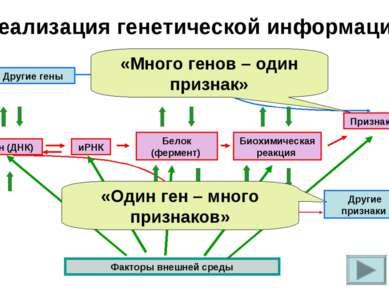 Реализация генетической информации Другие гены Ген (ДНК) иРНК Белок (фермент)...