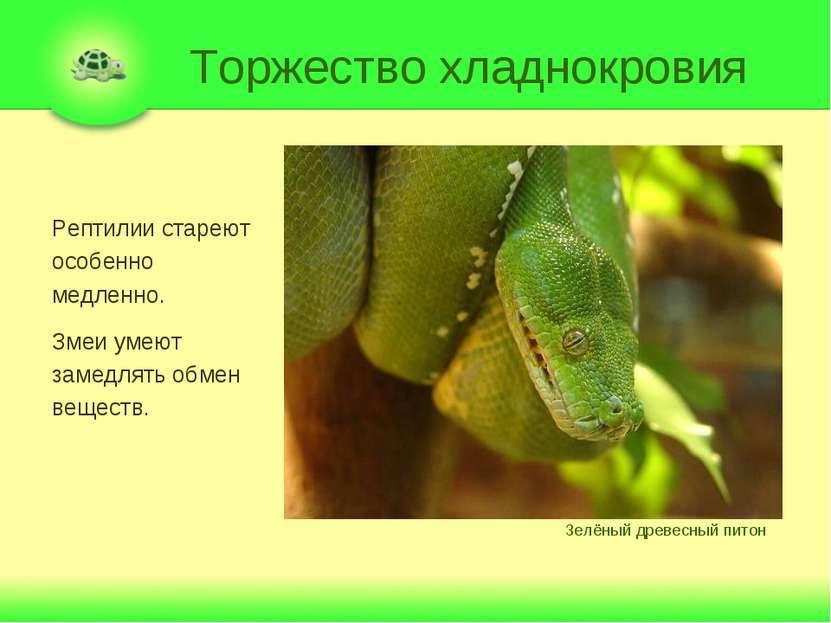 Торжество хладнокровия Рептилии стареют особенно медленно. Змеи умеют замедля...