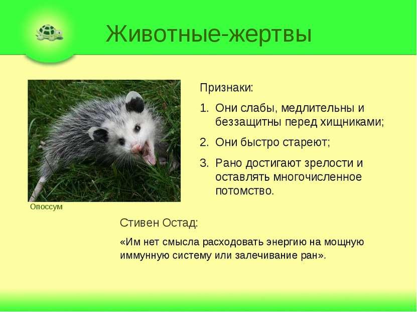 Животные-жертвы Опоссум Признаки: Они слабы, медлительны и беззащитны перед х...