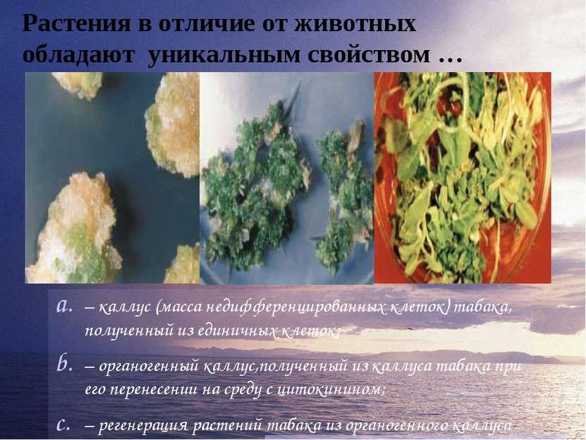 Растения в отличие от животных обладают уникальным свойством … – каллус (масс...
