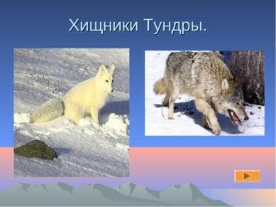 Хищники Тундры.