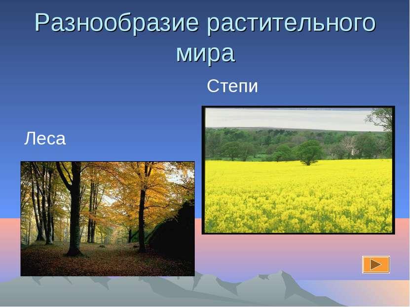 Разнообразие растительного мира Степи Леса