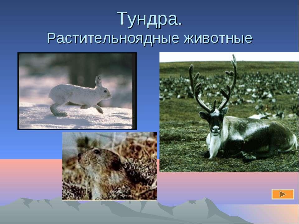 Тундра. Растительноядные животные