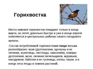 Горихвостка Места зимовок горихвостки покидают только в конце марта, но летят...