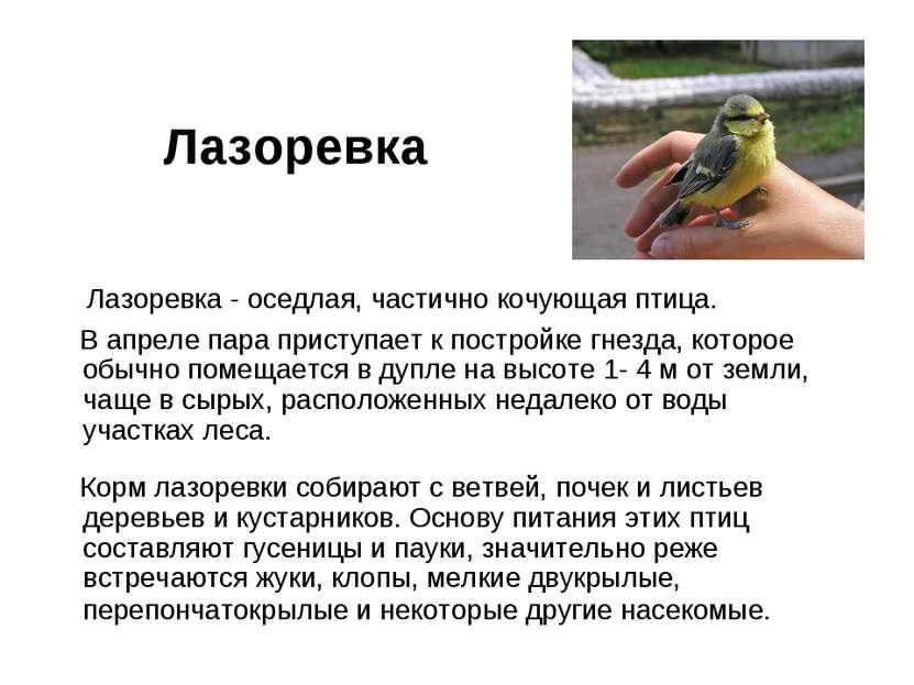 Лазоревка Лазоревка - оседлая, частично кочующая птица. В апреле пара приступ...