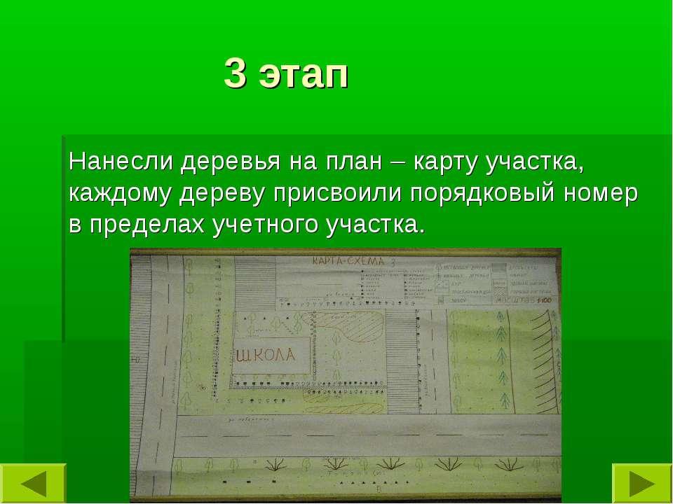 3 этап Нанесли деревья на план – карту участка, каждому дереву присвоили поря...