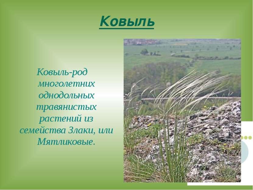 Ковыль Ковыль-род многолетних однодольных травянистых растений из семейства З...
