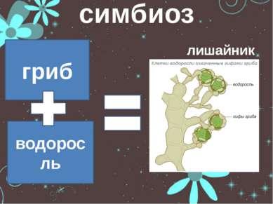 симбиоз лишайник гриб водоросль
