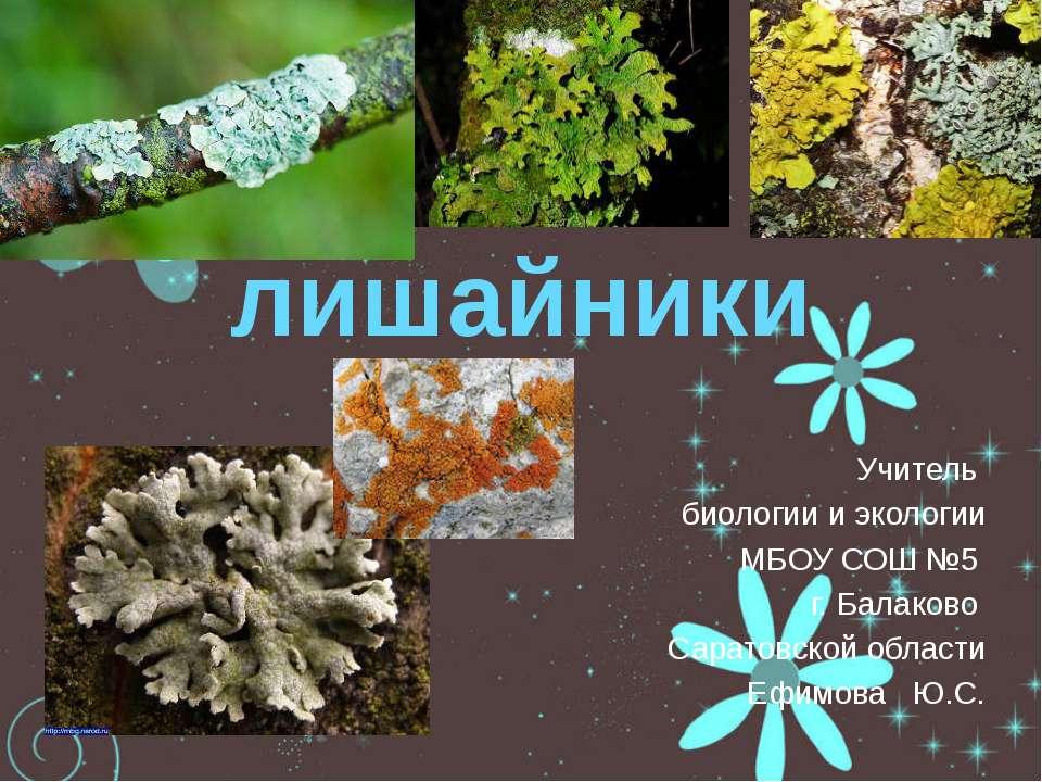 презентация на тему грибы и лишайники