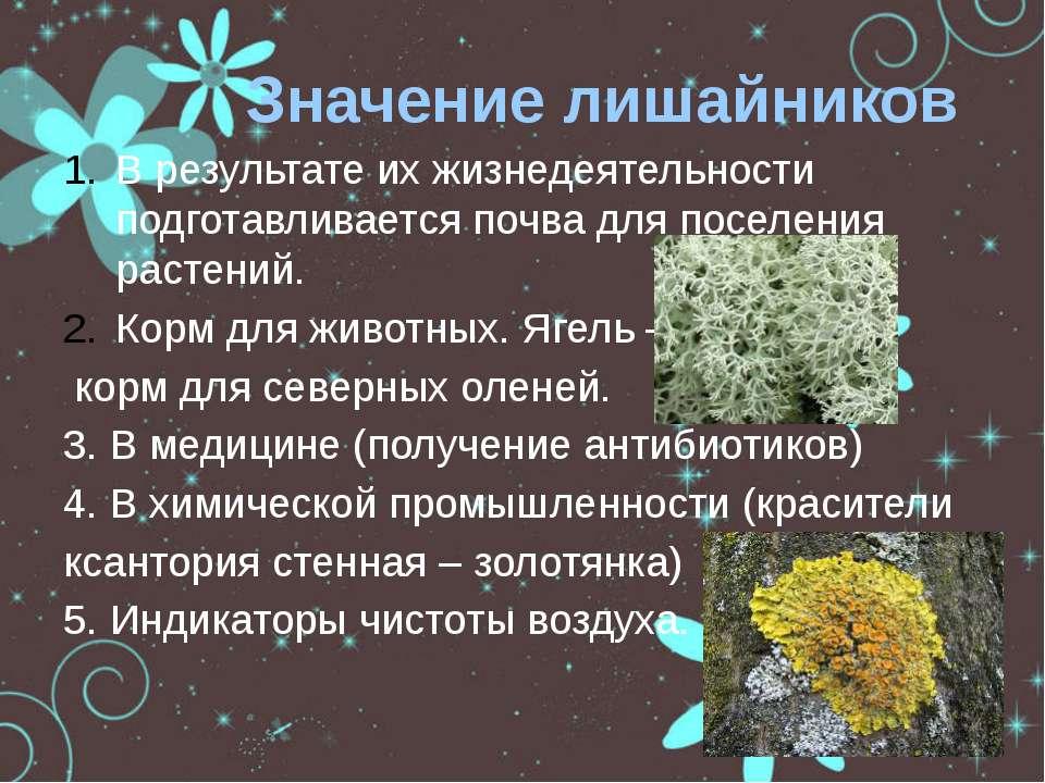 Значение лишайников В результате их жизнедеятельности подготавливается почва ...