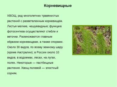 ХВОЩ, род многолетних травянистых растений с разветвленным корневищем. Листья...