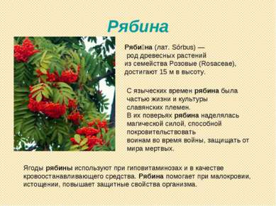 Рябина Ряби на (лат. Sórbus)— род древесных растений из семейства Розовые (R...