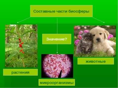 Составные части биосферы растения животные микроорганизмы Значение?