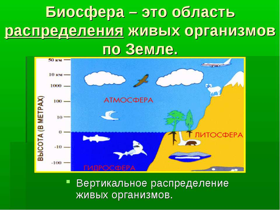Биосфера – это область распределения живых организмов по Земле. Вертикальное ...