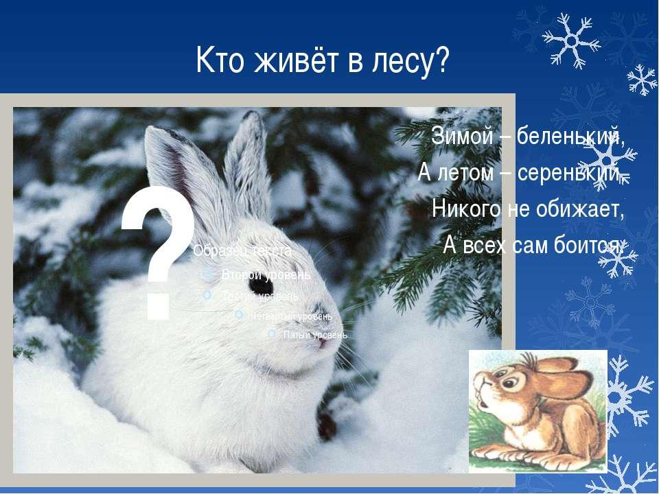 Кто живёт в лесу? Зимой – беленький, А летом – серенький. Никого не обижает, ...
