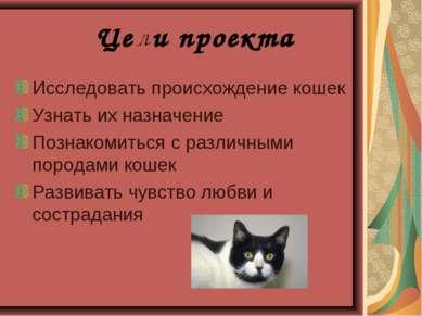 Исследовать происхождение кошек Узнать их назначение Познакомиться с различны...