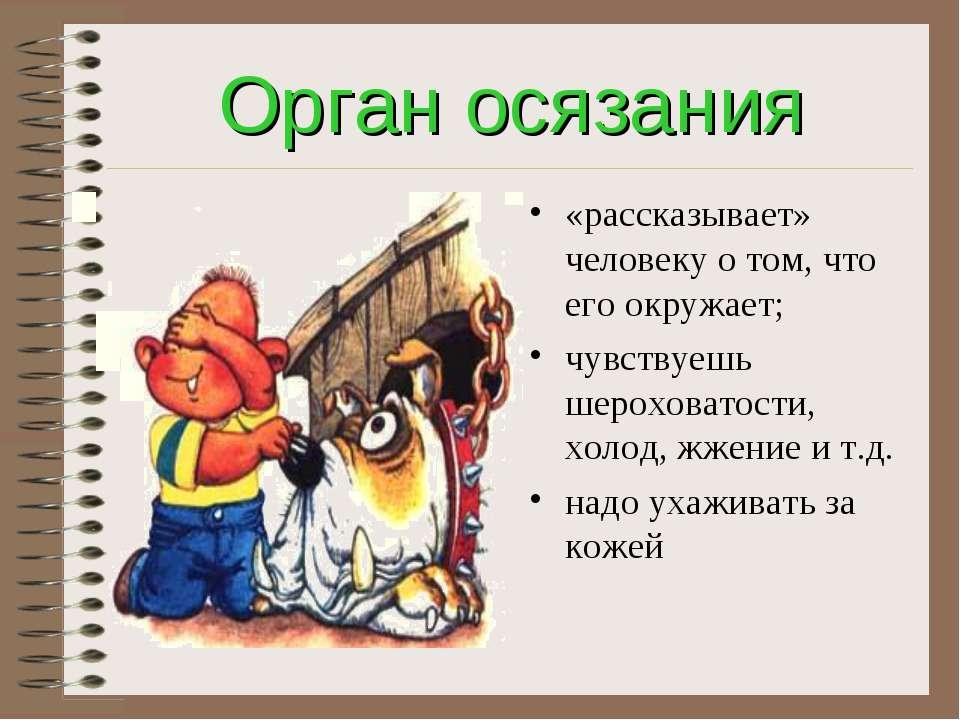Орган осязания «рассказывает» человеку о том, что его окружает; чувствуешь ше...