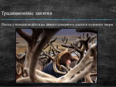 Традиционные занятия Охота у ненцев ведётся на дикого северного оленя и пушно...