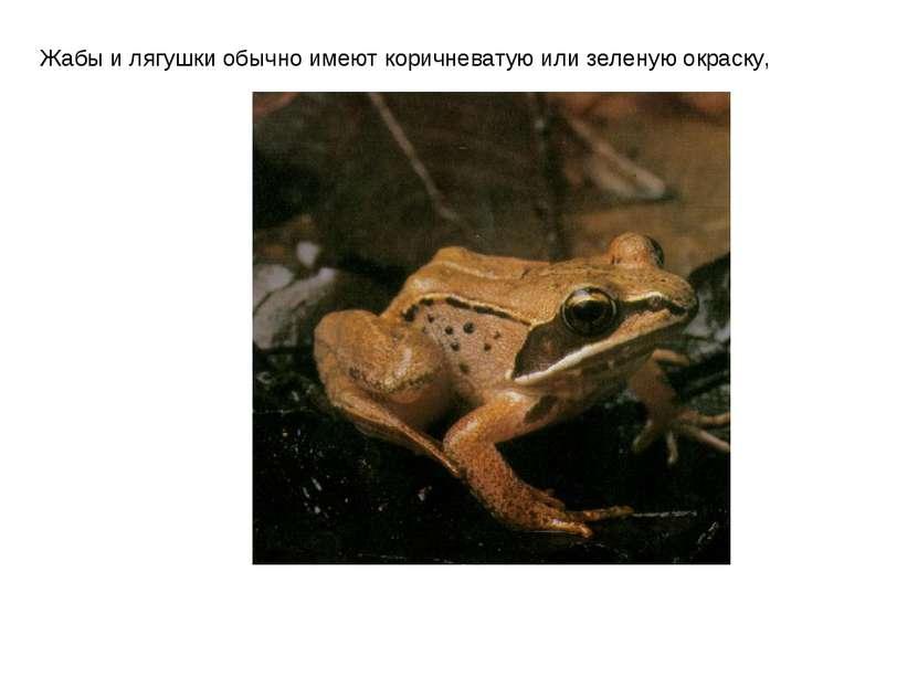 Жабы и лягушки обычно имеют коричневатую или зеленую окраску,