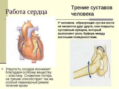 Работа сердца Упругость сосудов возникает благодаря особому веществу – эласта...
