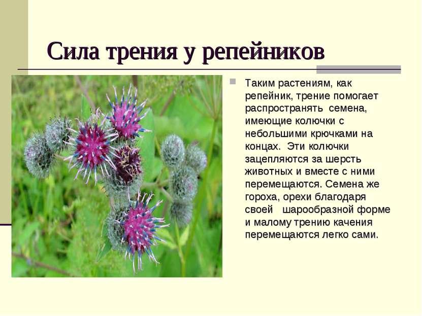 Сила трения у репейников Таким растениям, как репейник, трение помогает распр...