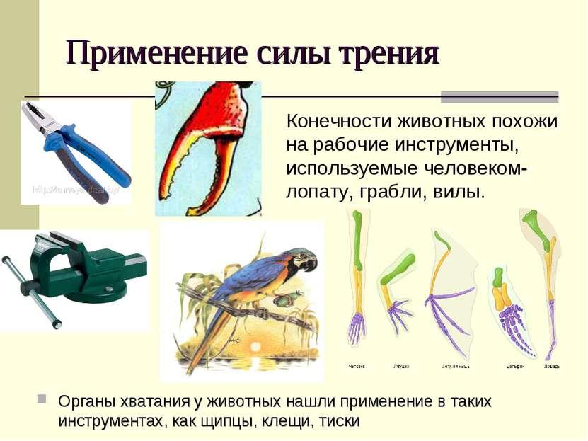 Применение силы трения Органы хватания у животных нашли применение в таких ин...