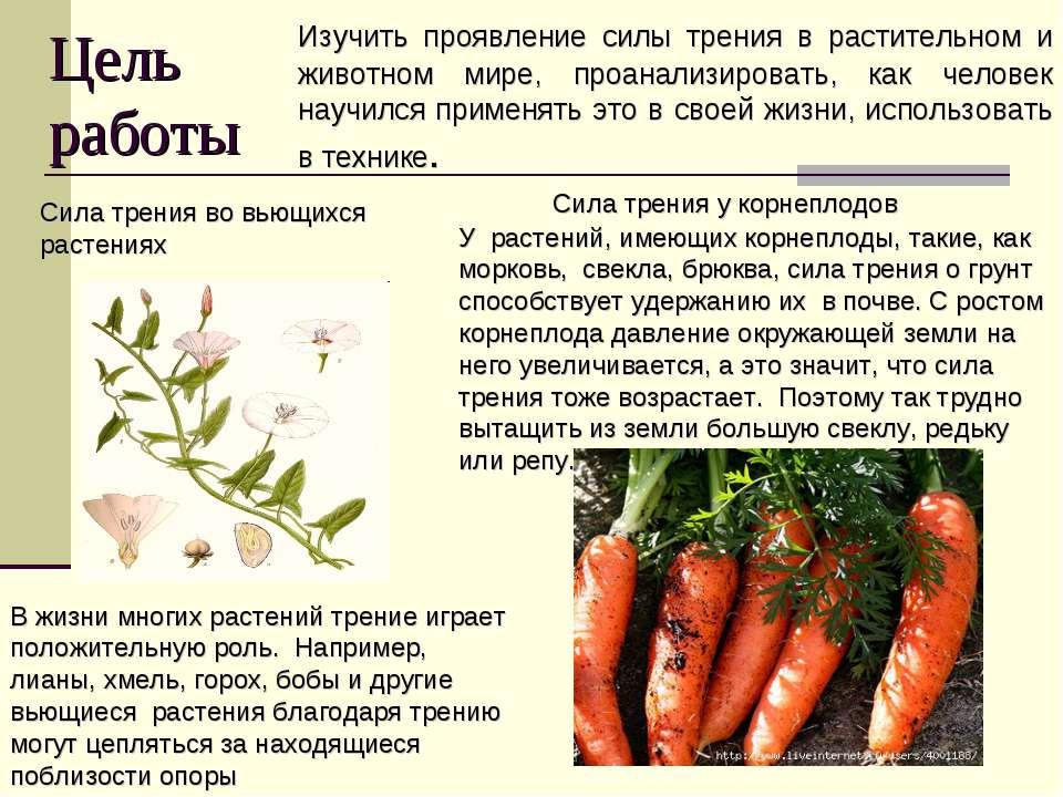 Цель работы Изучить проявление силы трения в растительном и животном мире, пр...