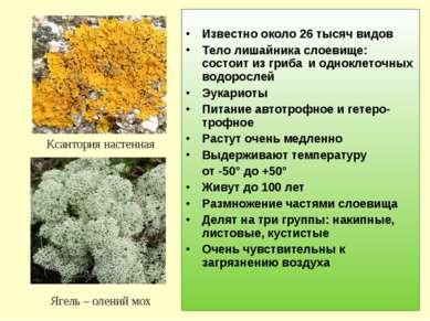 Известно около 26 тысяч видов Тело лишайника слоевище: состоит из гриба и одн...