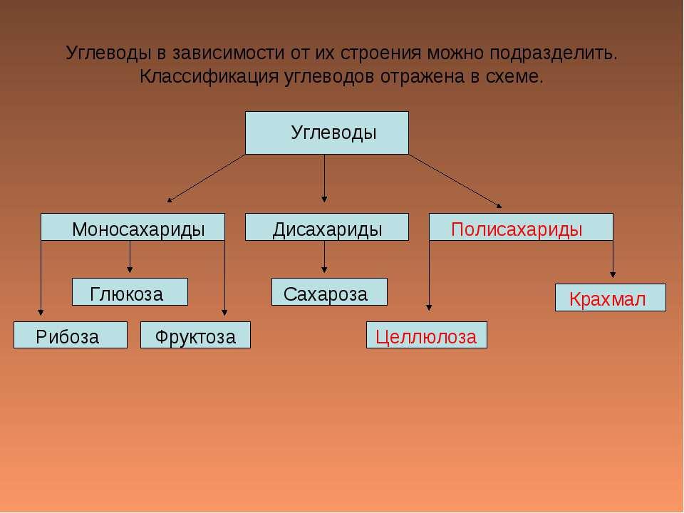 Углеводы в зависимости от их строения можно подразделить. Классификация углев...