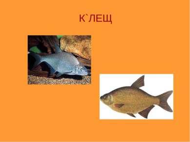 К`ЛЕЩ