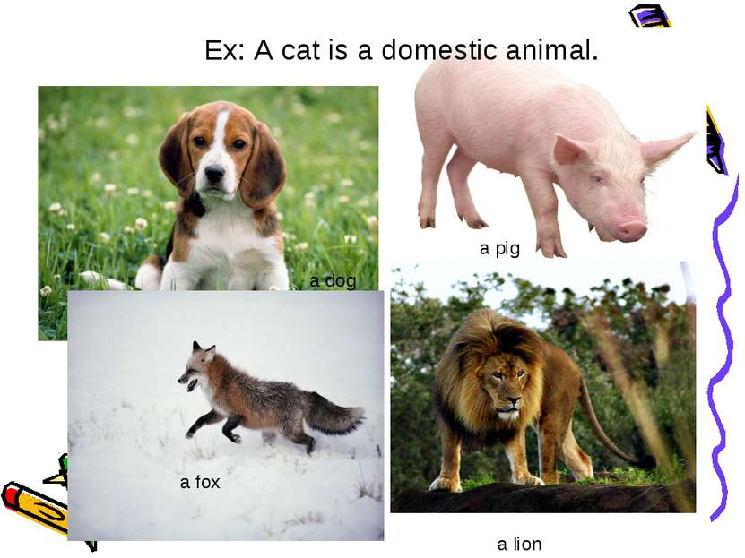 Ex: A cat is a domestic animal. a dog a pig a lion a fox