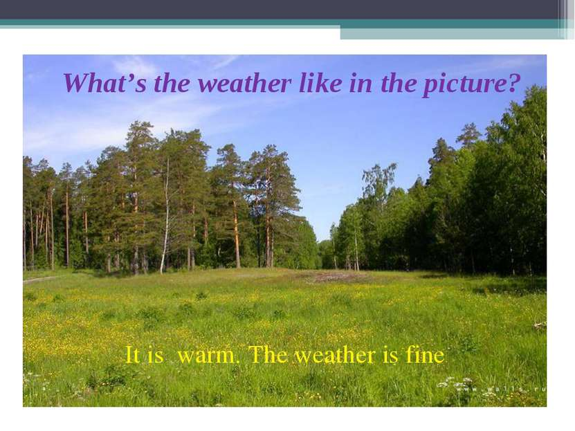 What's the weather like in the picture? It is warm. The weather is fine .