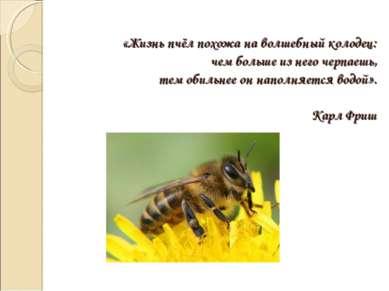 «Жизнь пчёл похожа на волшебный колодец: чем больше из него черпаешь, тем оби...